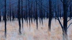 derevya-trava-priroda-cvet-2970